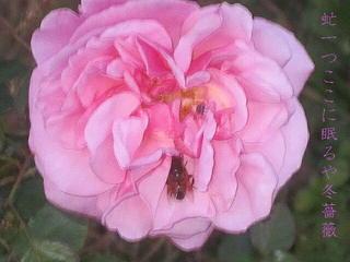 rosewinabu.jpg