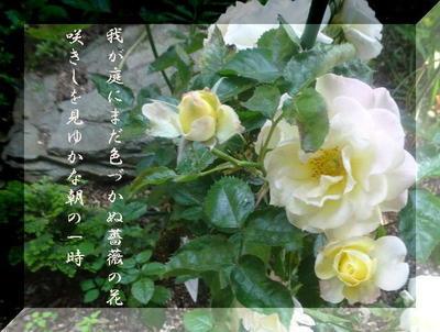 rosewwww111222233344.jpg