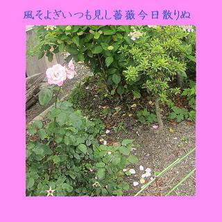 roswwindsss111.jpg