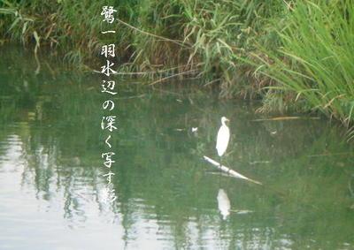 sagiwater111.jpg
