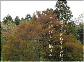 sakuraaaa1212.jpg
