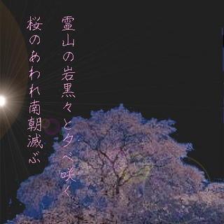 sakuraaaa1234.jpg