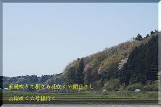 sakuraaaaa12356667778899000.jpg