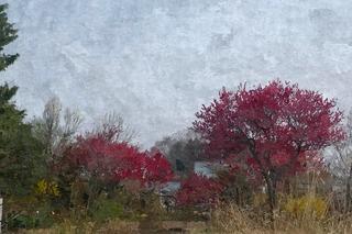sakuraaaaaaa111_FotoSketcher.jpg