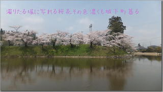 sakuradote11111.jpg