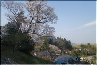 sakurakawago.jpg