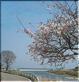 sakurakumagawa.jpg