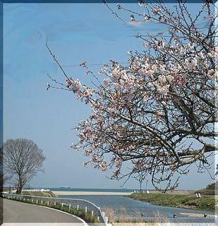 sakurakumagawa-thumbnail2[1].jpg