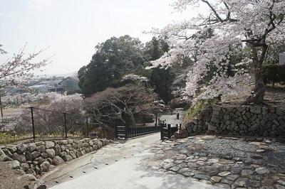 sakurashiro4.jpg