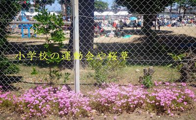 sakurasou1111.jpg