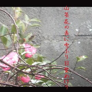 sazannkayuki1111.jpg