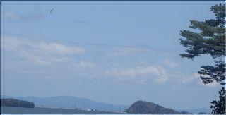 seagullssss1.jpg