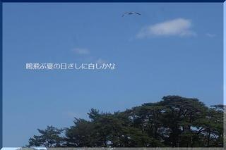 seagullssss22.jpg