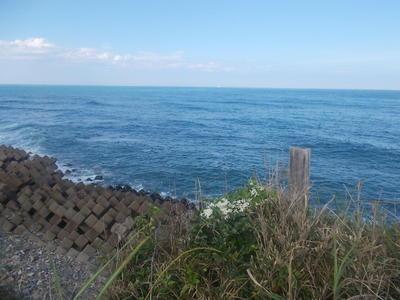 seashoreff1.jpg