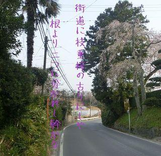 shidareee111.jpg