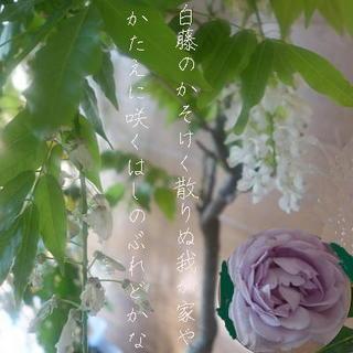 shinoburedooooo123.jpg