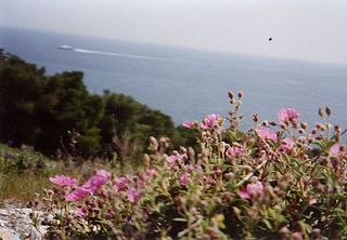shipflowers.jpg