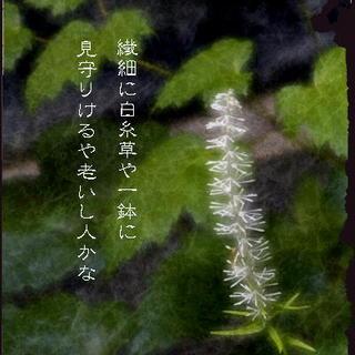 shiraitosouuu11.jpg