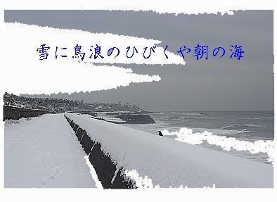 snowbird123.jpg