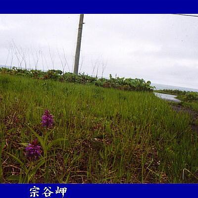 souyamisaki1.jpg
