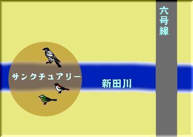 sssbirds2.JPG