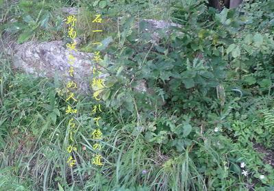 stonekiku111.jpg