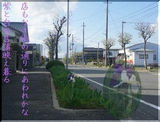 streeeyayame123.jpg