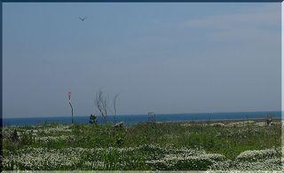 summerbirddd111.jpg