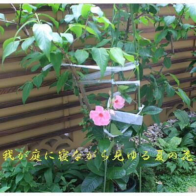 summerflower1111.jpg