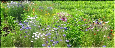 summerflowers111_FotoSketcher4444end.jpg