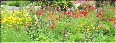 summerflowers2222_FotoSketcherend.jpg