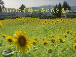 sunflowerhyaku1111.jpg