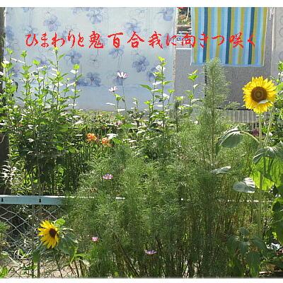 sunfloweroni11.jpg