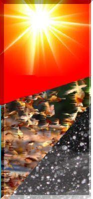 sunleaf1.jpg