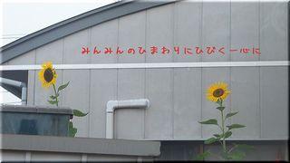 sunnflower12345.jpg