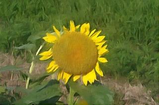 sunnflowerrr345_FotoSketcher.jpg