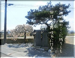tahahakami111.jpg