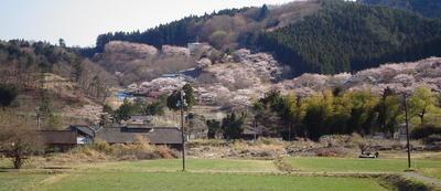 takakurasakuraa112.jpg