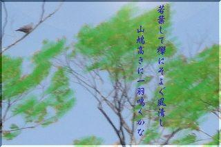 tamabato11111.jpg