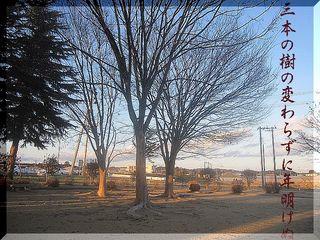 threetrees111.jpg