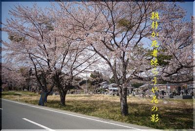 tombsakura1.jpg