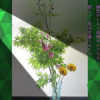 torukoooo123.jpg