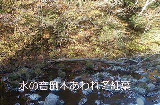 toubokuhaiku111.jpg