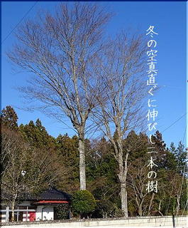 tree22222222.jpg