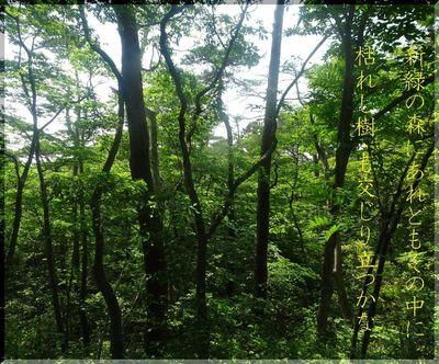 treedddd111222.jpg