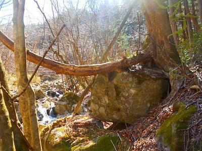 treerootrock6.jpg