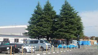 treeshouse2222.jpg