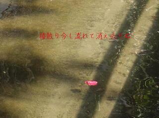 tubakiiii23.jpg