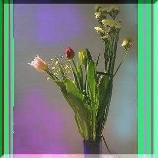 tulipppppp12345.jpg