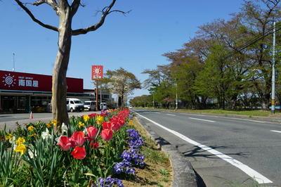 tulipstreet1.jpg